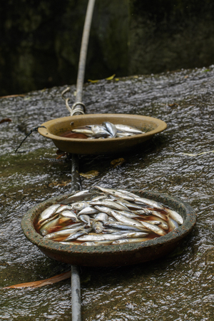 Image of a fish in the plate. Aquatic animals. Food