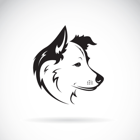 Vector of a border collie dog on white background. Pet. Animal.  イラスト・ベクター素材