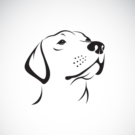 Vector of a dog head (Labrador Retriever) on white background