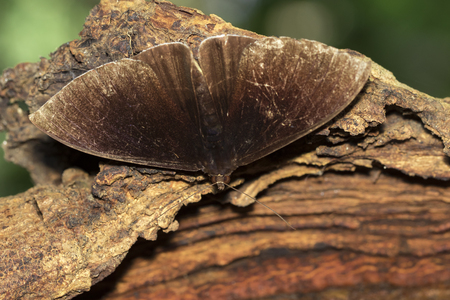 Image of brown butterfly(Moth) on tree. Insect. Animal.