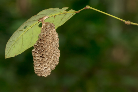 Image of honeycomb empty under the green leaf. Stock Photo