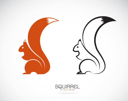 Vector of squirrel design on white background. Mammal. Animals.