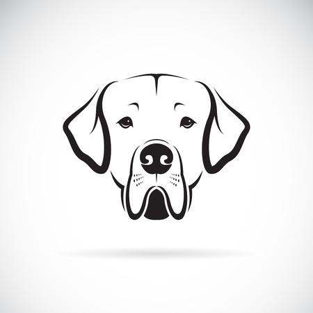 Great Dane dog head on white illustration.