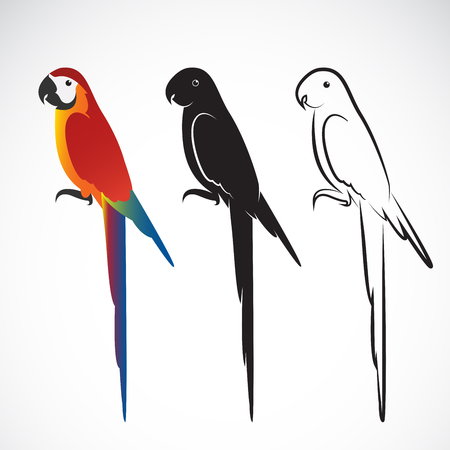 Vector of a parrot (Macaws) on white background.