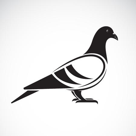 흰색 배경에 비둘기 디자인의 벡터입니다. 새. 동물. 벡터 일러스트 레이 션.