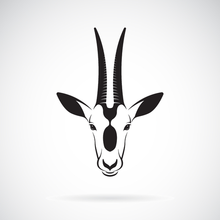 Vettore di un design testa di Oryx scimitarra-cornuto su sfondo bianco. Archivio Fotografico - 92670608