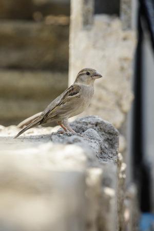 Image of sparrow on the floor. bird. Animal. Stock Photo