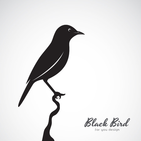 Vector of a black bird on white background.