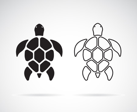 Vector of turtle design on a white background. Ilustração