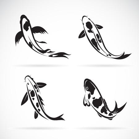 Carp koi fish isolated on white background. Easy editable layered vector illustration. Illustration
