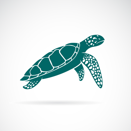 Vector of sea turtle isolated on white background. Animal. Organism under the Sea. Easy editable layered vector illustration.