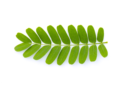 Image of green tamarind leaves on white background. Nature. Stock Photo