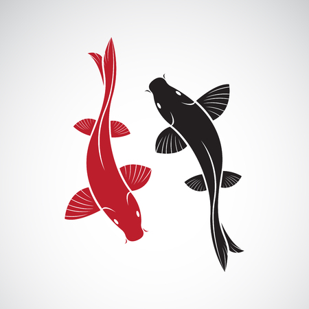 Vector of carp koi fish isolated on white