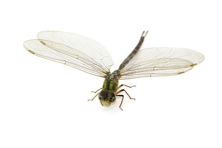 Bild der Libelle auf einem weißen