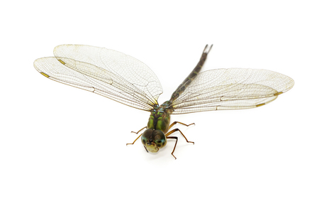 Imagen de libélula sobre un blanco