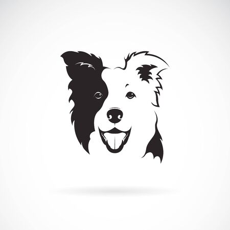 Vector of a border collie dog on white