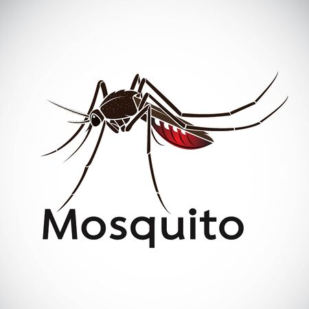 Vector of a mosquito design on white background. Insect. Animal. Easy editable layered vector illustration.