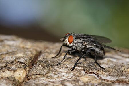mage of a flies (Diptera) on tree on a natural background. Insect. Animal.