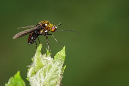 Image of hoverfly(Syrphidae) on branch on a natural
