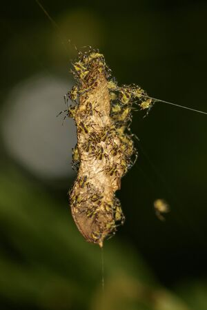 Image of little spider on the nest on a natural