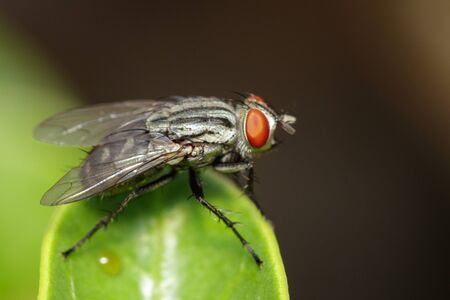 Image of a flies (Diptera) on green leaves