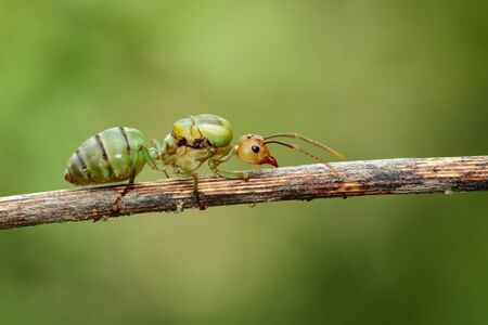 Image of the queen of ants on dry branches. Banco de Imagens