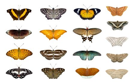 Group of colorful butterfly and moth isolated on a white