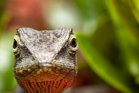 Image of chameleon or lizard head on the natural  with space blur