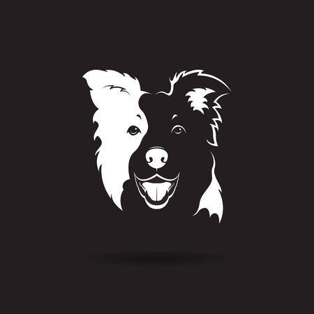 Vector of a border collie dog on black