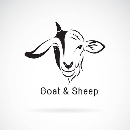 Vector of goat face and sheep face on a white Çizim