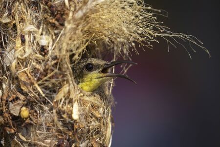 Image of sunbird in the nest on nature