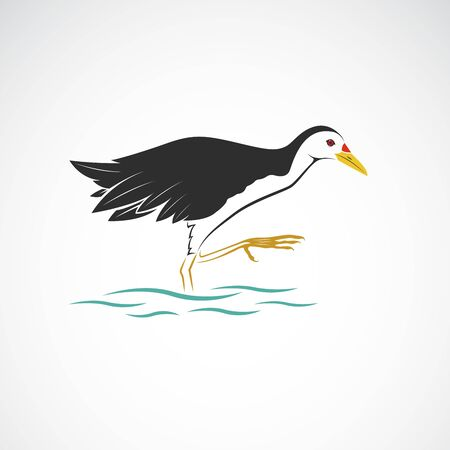 White breasted waterhen isolated on white background. Birds. Animals. Easy editable layered vector illustration.