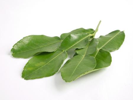 Kaffir lime leaf photo