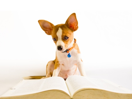 dog read book on white background