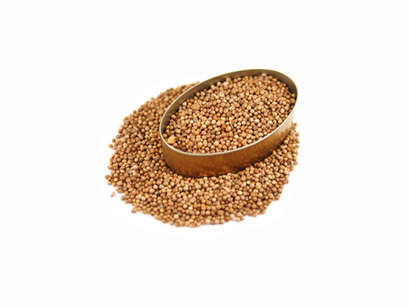 coriander seeds: Coriander seeds in can on white background  Stock Photo