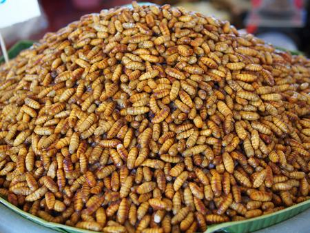 silkworm: silkworm Stock Photo