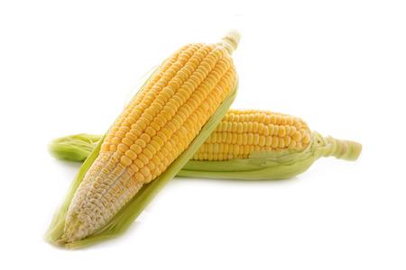 corn yellow: ma�z amarillo con leal en el fondo blanco