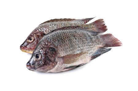 nilotica: whole round fresh Tilapia fish on white background