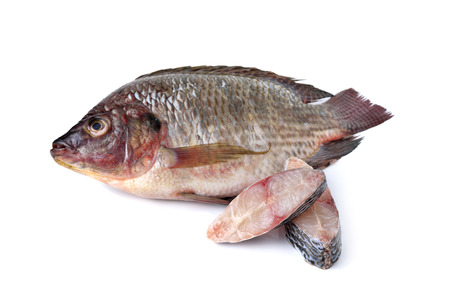 peice: whole round fresh Tilapia fish on white background