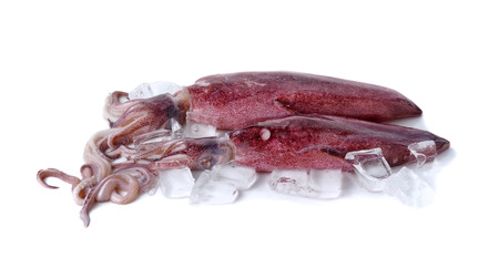 calamares: fresca calamar entero redondo con cubitos de hielo en el fondo blanco