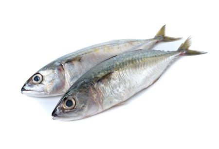 raw fish: fresh whole round indian mackerel on white background