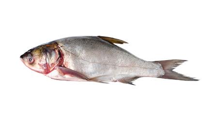 sliver: whole round sliver carp fish on white background