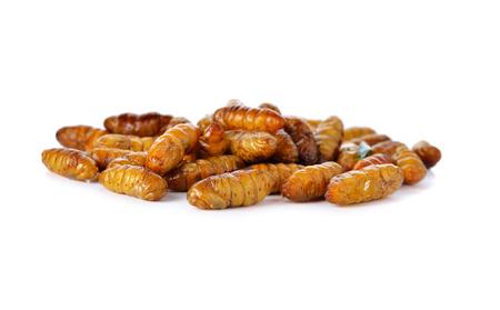 silkworm: pile of fried silkworm on white background Stock Photo
