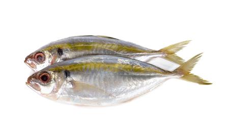 whole round fresh yellow-stripe scad fish on white background Imagens