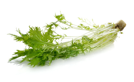 potherb: Mizuna, Japanese water vegetable or potherb mustard on white background Stock Photo