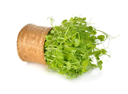 heap of snow: heap of snow pea sprouts or Toumyou sprouts in bamboo basket on white background
