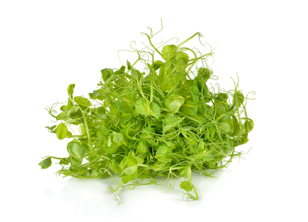 heap of snow: heap of snow pea sprouts or Toumyou sprouts on white background