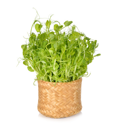 sprout growth: snow pea sprouts or Toumyou sprouts in bamboo basket on white background