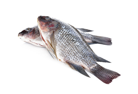 gutted: Gutted and scaled Nile Tilapia fish on white background Stock Photo