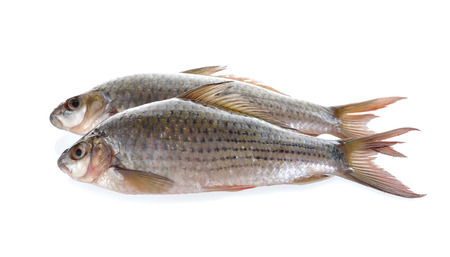 siamensis: uncooked Labiobarbus siamensis fish on white background Stock Photo